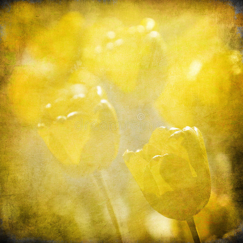 Fundo floral de Grunge com espaço para o texto ilustração royalty free