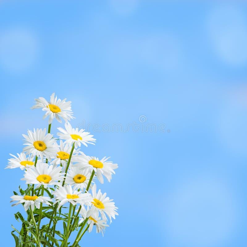 Fundo floral de Sprind para o projeto imagens de stock