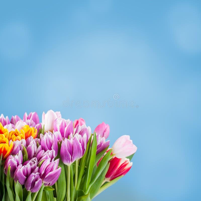 Fundo floral de Sprind para o projeto imagem de stock