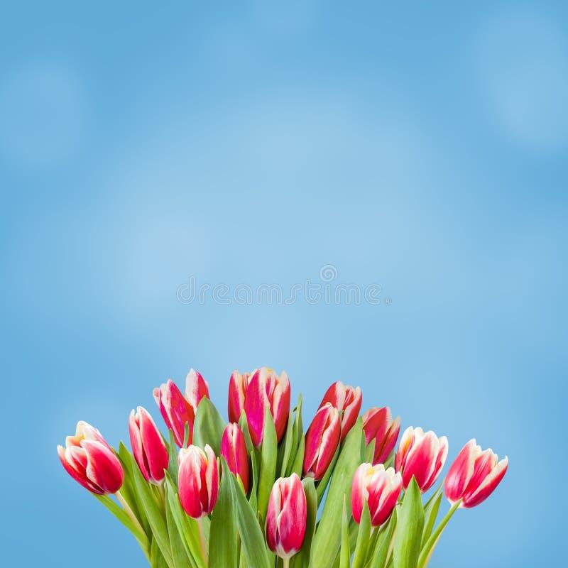 Fundo floral de Sprind para o projeto fotografia de stock royalty free