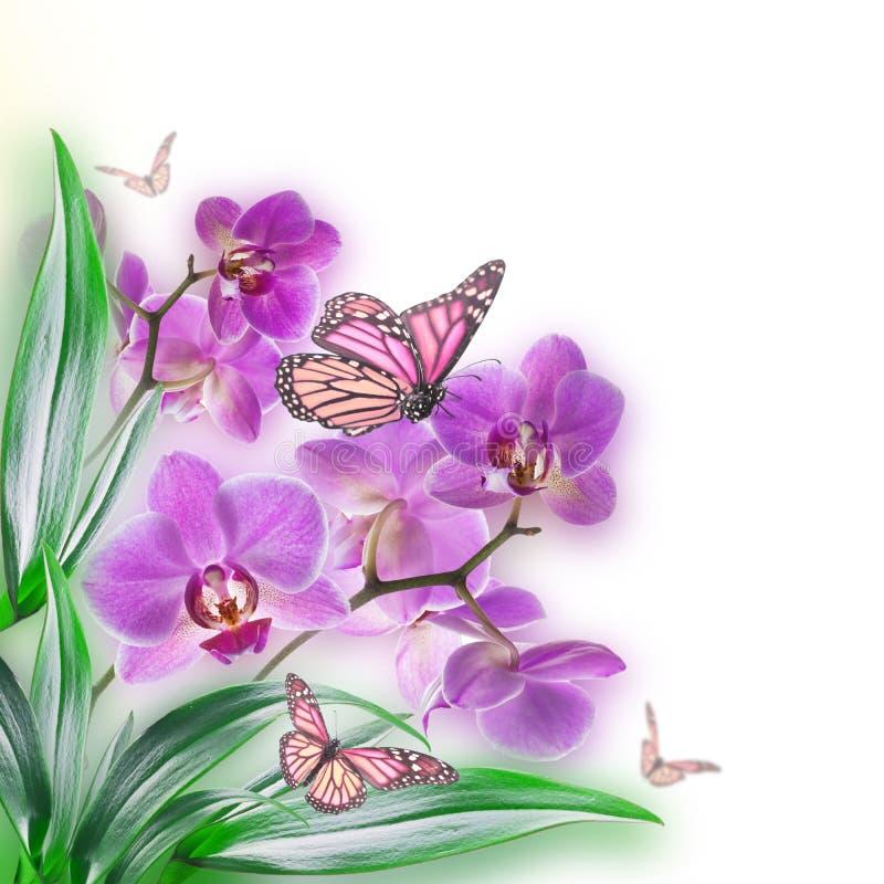 Fundo floral de tropical ilustração stock