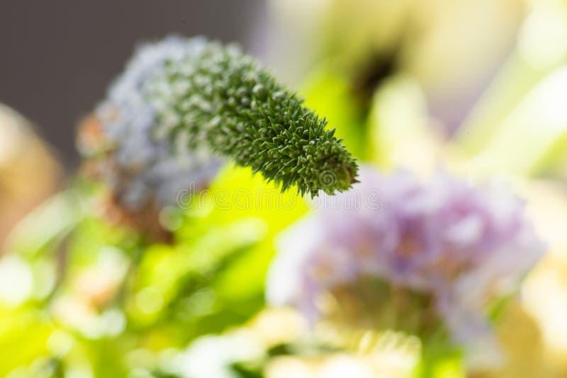 Fundo floral delicado e colorido brilhante fotos de stock royalty free
