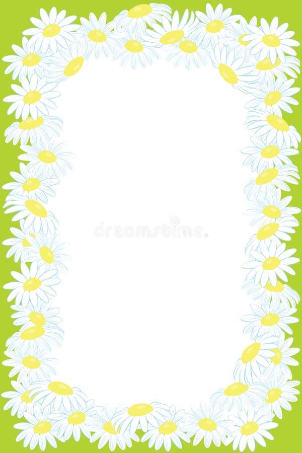 Fundo floral do frame da flor da camomila ilustração do vetor