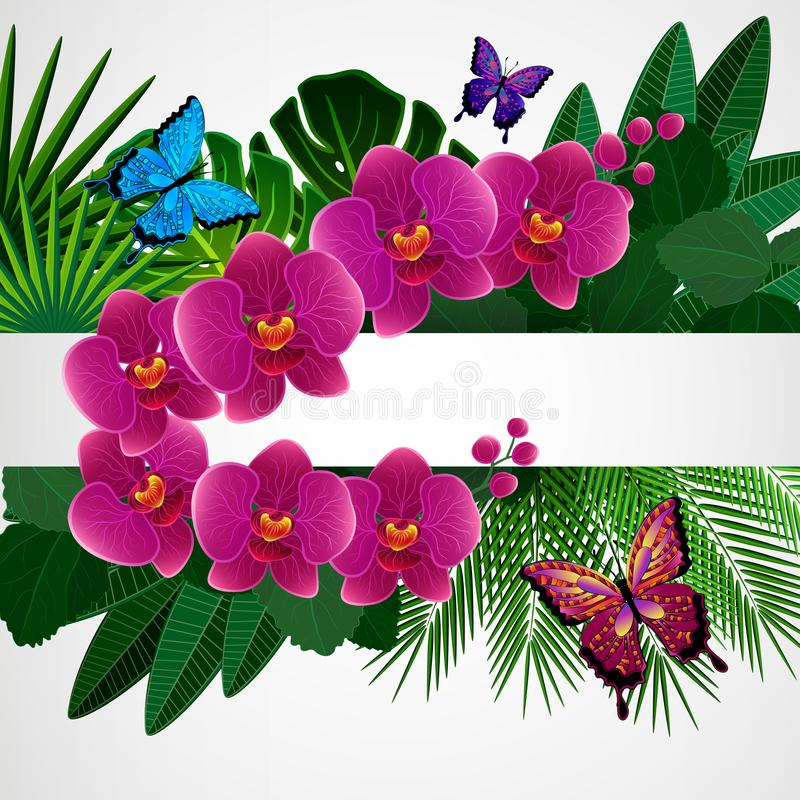 Fundo floral do projeto Flores da orquídea com borboletas ilustração do vetor