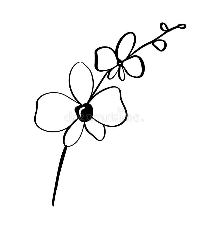 Fundo floral do vetor monocromático bonito com ramo da orquídea com as flores no estilo gráfico Logotipo do ícone da ilustração p ilustração do vetor