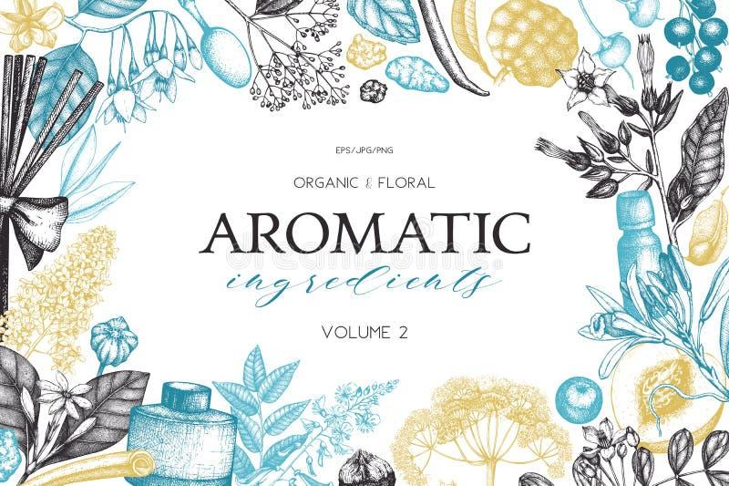 Fundo floral do vetor Perfumaria e ilustração tiradas mão dos ingredientes dos cosméticos Projeto de planta aromática e medicinal ilustração do vetor