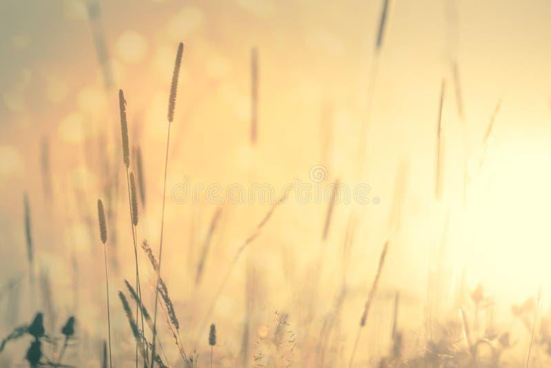 Fundo floral do vintage da natureza do prado foto de stock