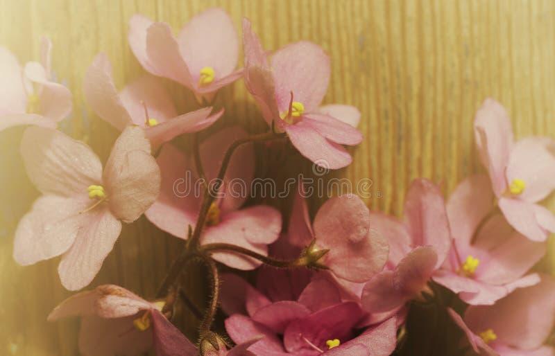 Fundo floral do vintage Ramalhete de flores violetas cor-de-rosa em uma placa de madeira velha Manh? ensolarada enevoada foto de stock royalty free