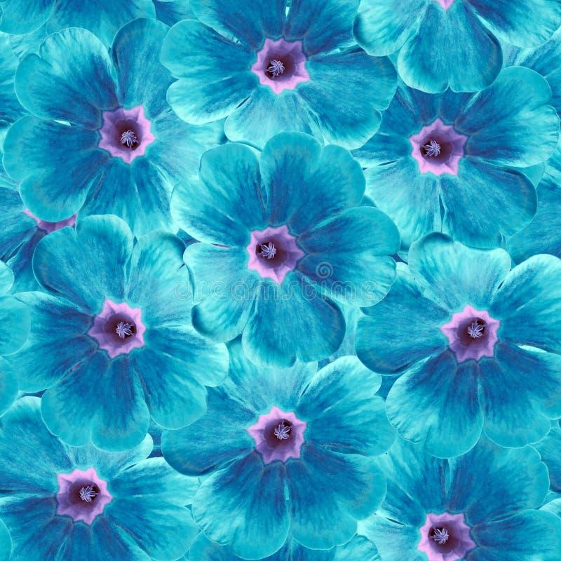 Fundo floral infinito sem emenda para o projeto e a impressão Fundo de violetas naturais de azul-turquesa fotografia de stock royalty free
