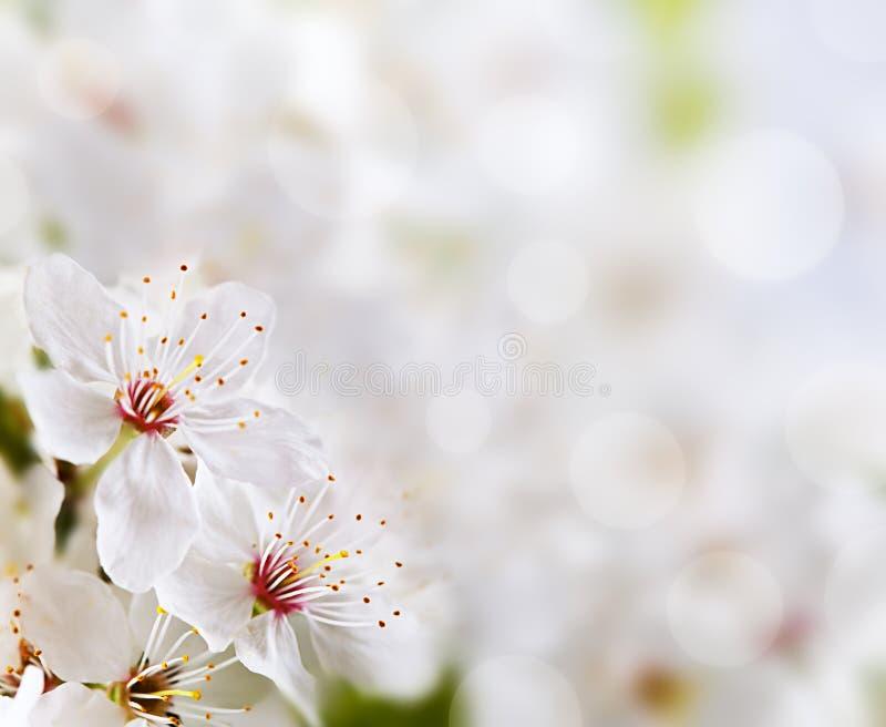 Fundo floral macio foto de stock