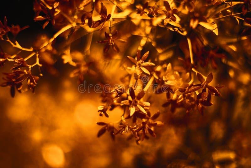 Fundo floral Papel digital matizado Papel de parede de cobre do estilo do bokeh foto de stock