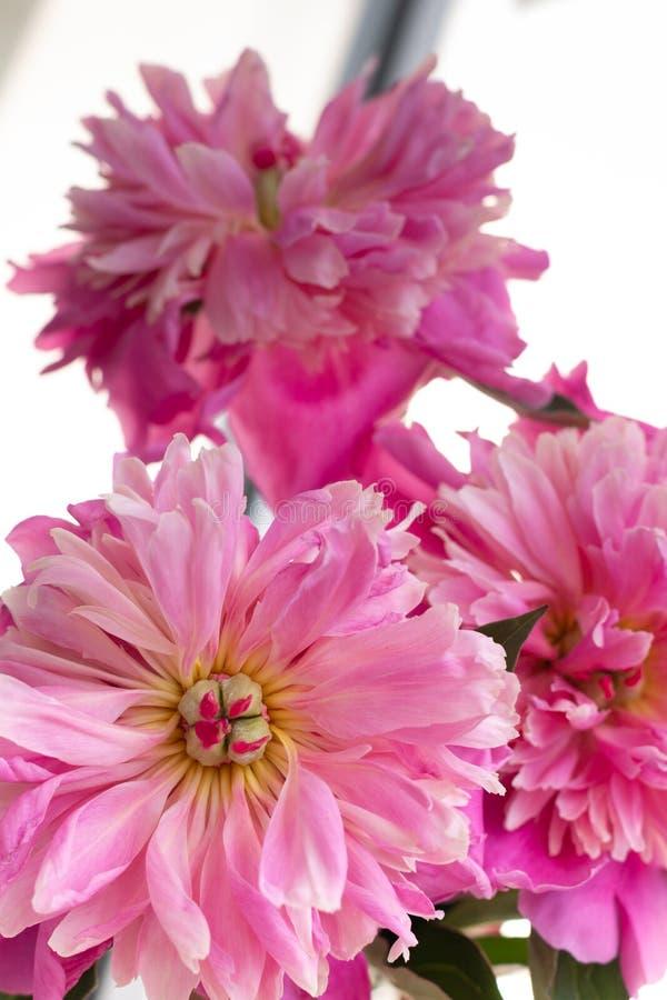 Fundo floral para imagens do design de interiores imagens de stock