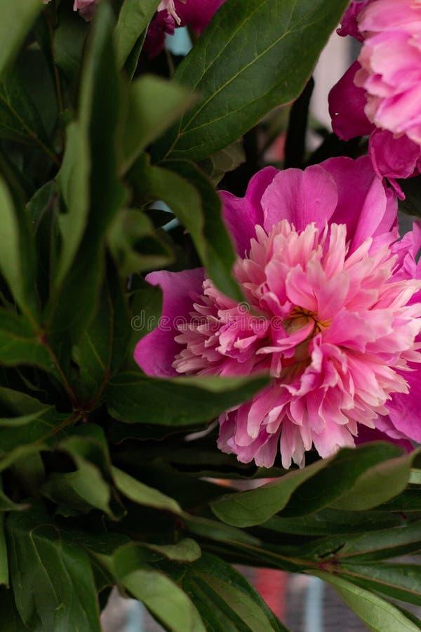Fundo floral para imagens do design de interiores fotografia de stock royalty free