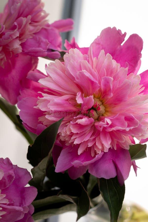 Fundo floral para imagens do design de interiores imagem de stock royalty free