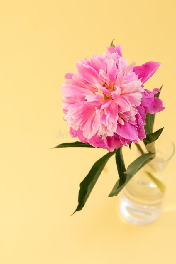 Fundo floral para imagens do design de interiores imagem de stock