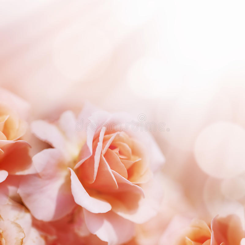 Fundo floral pastel do borrão de Defocus fotografia de stock royalty free