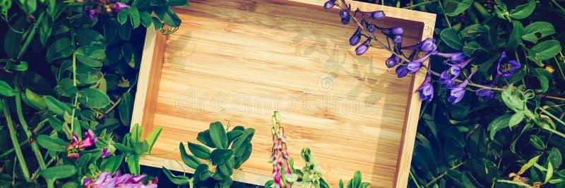 Fundo floral verde criativo das plantas naturais Bandeira do quadro do papel de embalagem imagens de stock