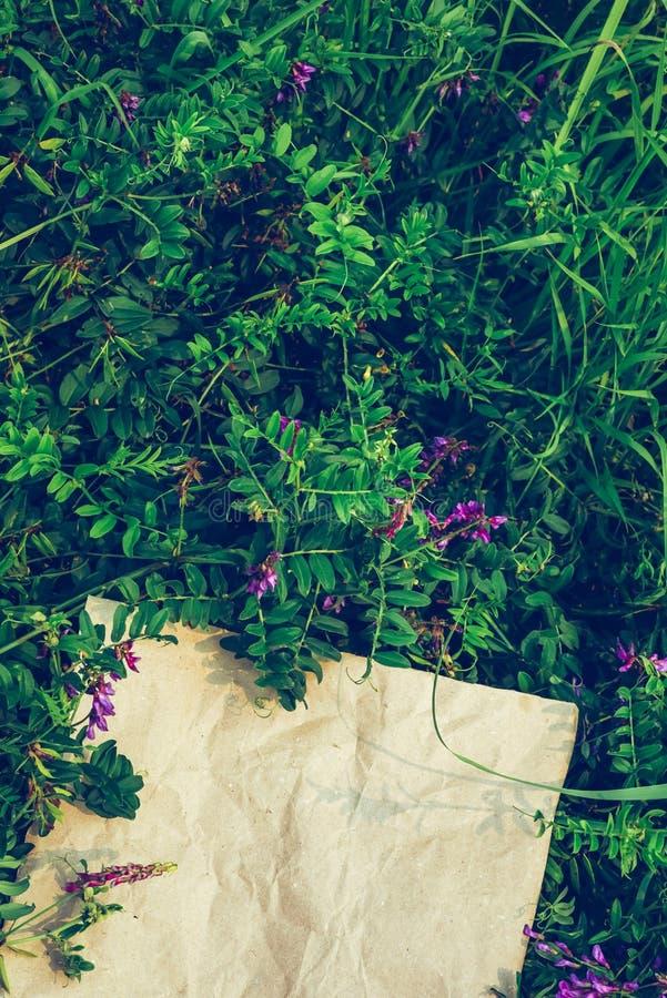 Fundo floral verde criativo das plantas naturais Quadro do papel de embalagem imagens de stock royalty free