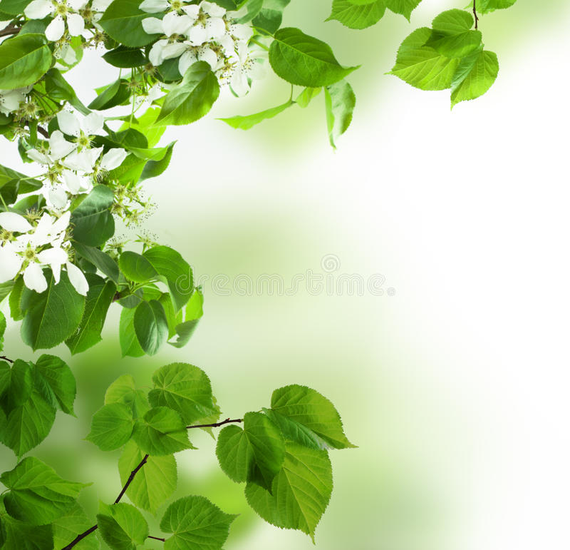 Fundo, folhas da mola e flores fotos de stock
