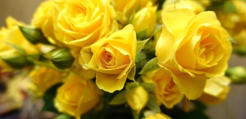 Fundo fresco da flor do ramalhete das rosas amarelas imagem de stock royalty free