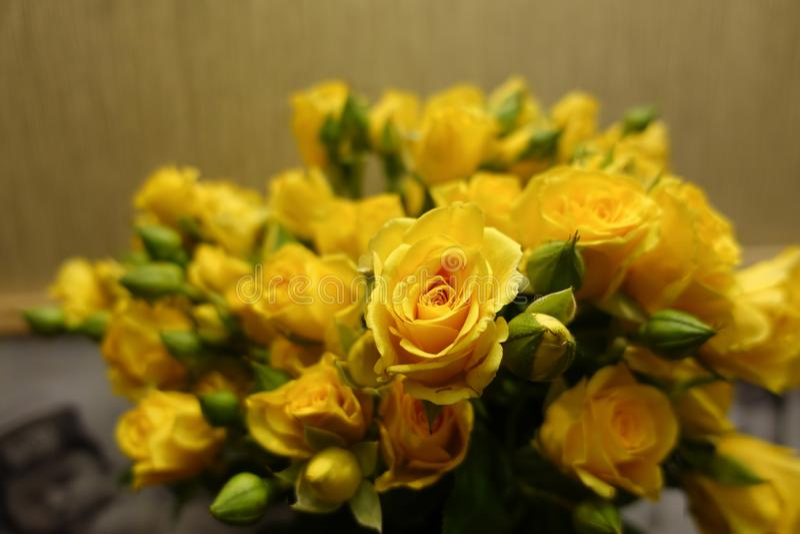 Fundo fresco da flor do ramalhete das rosas amarelas foto de stock