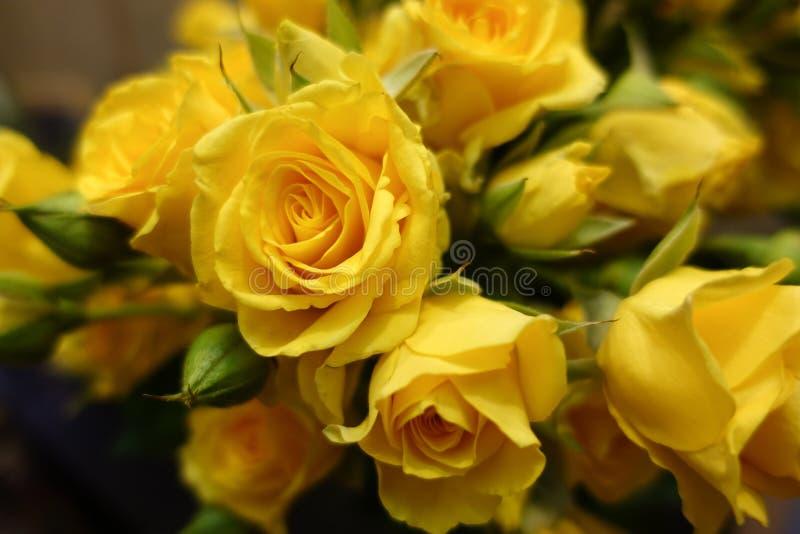 Fundo fresco da flor do ramalhete das rosas amarelas fotos de stock