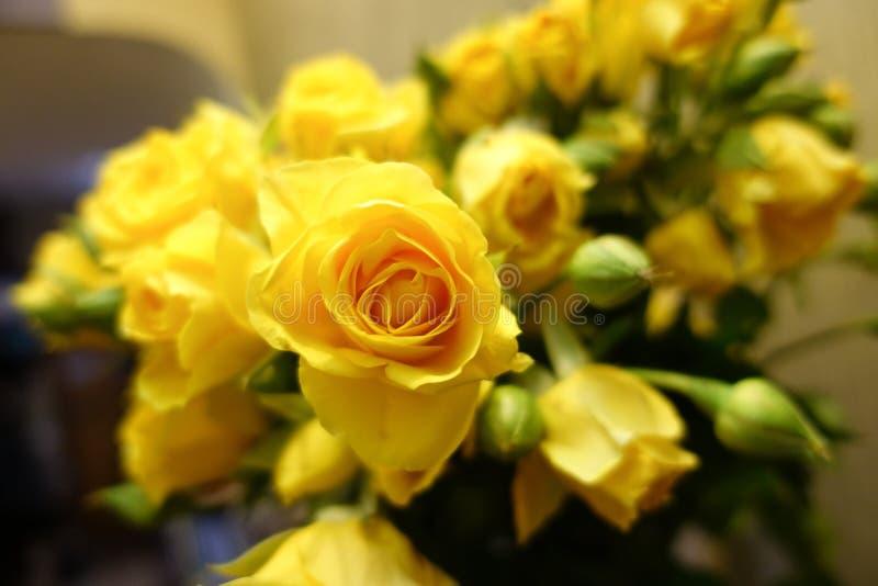 Fundo fresco da flor do ramalhete das rosas amarelas imagem de stock