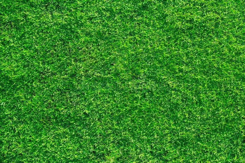 Fundo fresco da grama do gramado fotos de stock royalty free