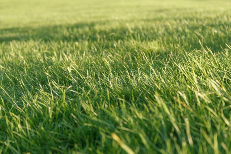 Fundo fresco da grama verde fotos de stock
