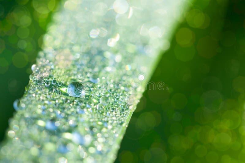 Fundo fresco da natureza com gotas da grama e da água fotografia de stock royalty free