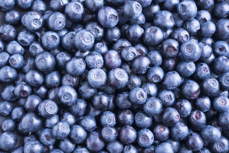 Fundo fresco da uva-do-monte As bagas do mirtilo da textura fecham-se acima Fundo maduro da uva-do-monte As bagas da uva-do-monte imagens de stock royalty free