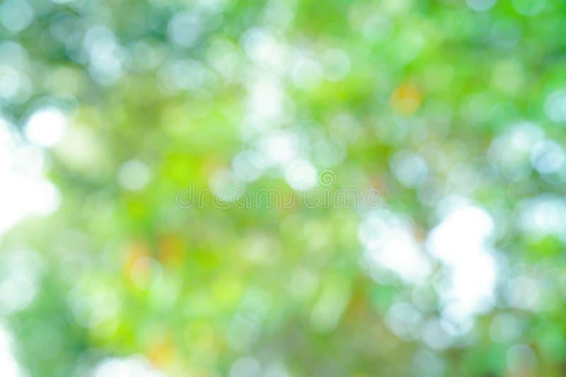 Fundo fresco do parque natural da árvore da folha do bokeh abstrato do borrão imagens de stock