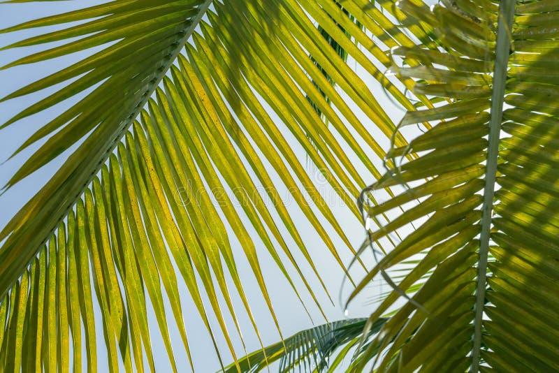 Fundo fresco, em folha de palmeira verde Comely, bonito contra o céu azul fotos de stock