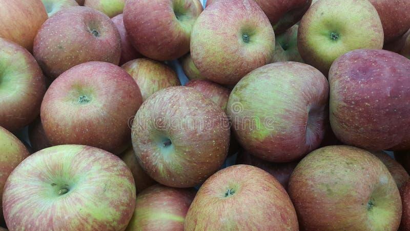 Fundo friável escolhido fresco das maçãs do mel vermelho fotos de stock