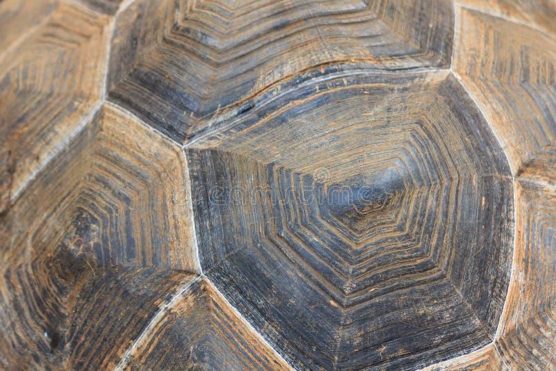 Fundo gigante da textura do shell da tartaruga foto de stock