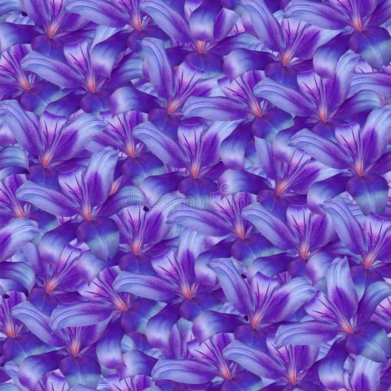 Fundo infinito sem emenda floral lírio Roxo-azul das flores para o projeto e a impressão Fundo de flores naturais fotos de stock