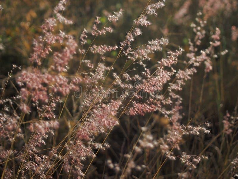Fundo macio de flores do feno fotos de stock