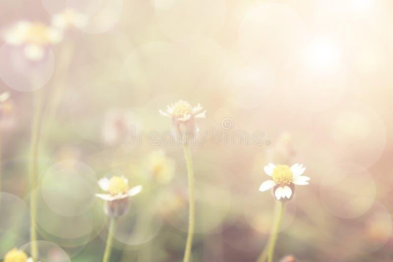 Fundo macio e borrado do campo do wildflower do sonho doce imagens de stock