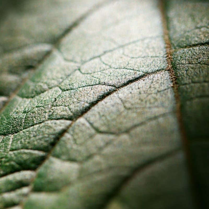 Fundo da folha verde foto de stock royalty free