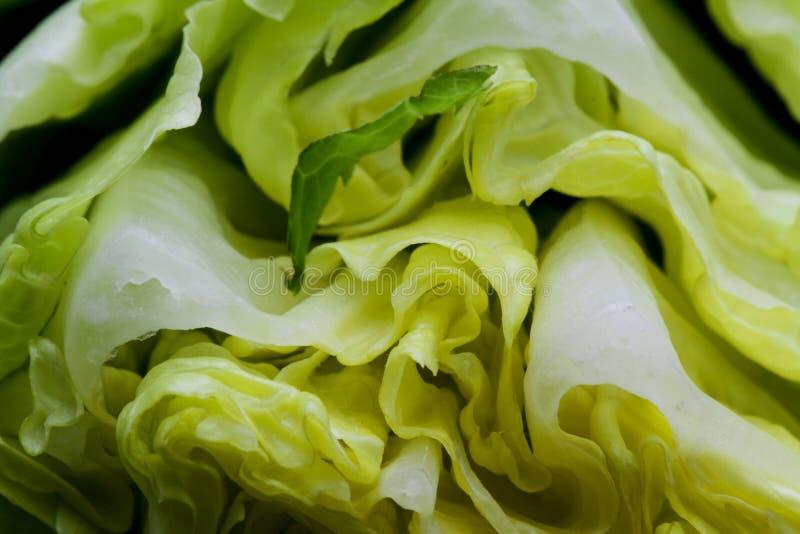 Fundo macro das vitaminas do vegetariano vegetal da alface imagens de stock