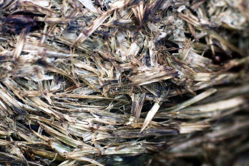 fundo macro de madeira fotografia de stock
