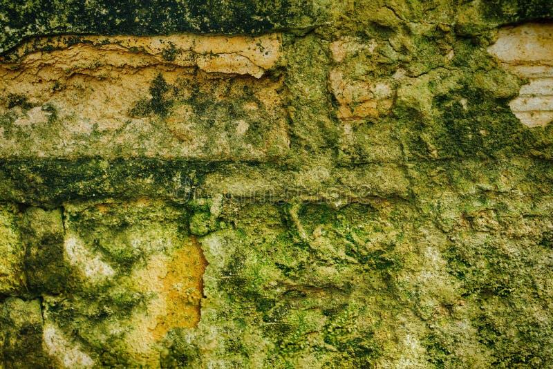 Fundo marrom e verde rachado da textura do muro de cimento foto de stock