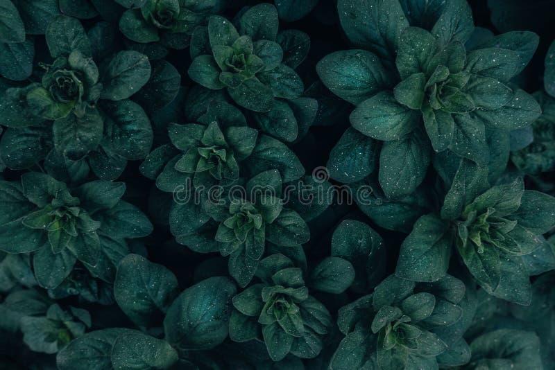 Fundo minimalistic verde-claro da opini?o superior das folhas imagens de stock royalty free