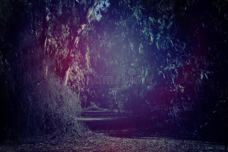 fundo misterioso da obscuridade e da floresta assombrada fotos de stock