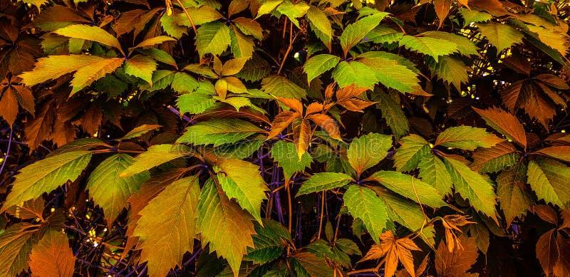 Fundo muito bonito das folhas coloridas! fotos de stock