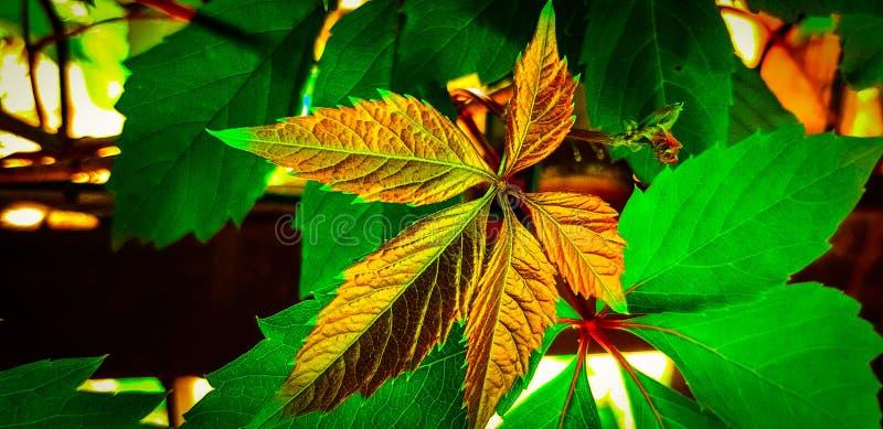 Fundo muito colorido com cor da folha de ouro no fundo verde da folha! imagens de stock royalty free