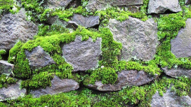 Fundo musgoso da textura da parede de pedra foto de stock