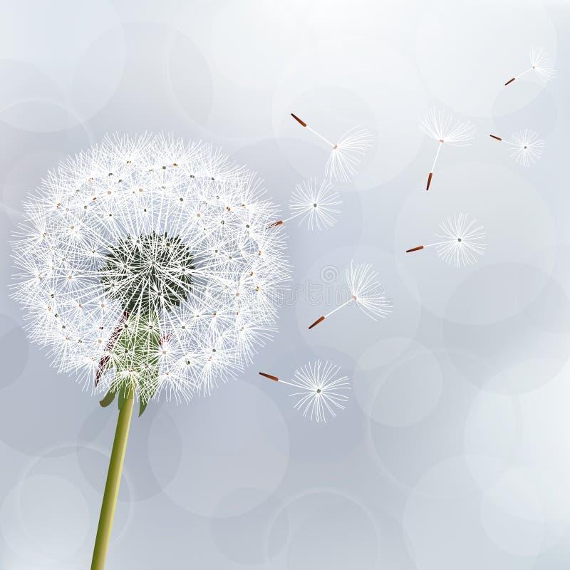 Fundo na moda floral com dente-de-leão da flor ilustração stock
