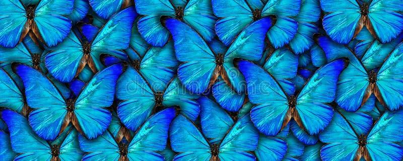 Fundo natural bonito com muitos butterflys azuis vibrantes Trabalho de arte da colagem da foto Uma alta resolu??o ilustração do vetor