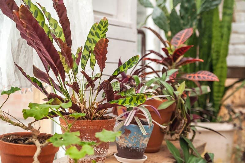 Fundo natural bonito de plantas internas, estufas Selva urbana, um lugar para o resto e abrandamento Orqu?deas, plantas internas imagem de stock